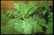植物世界0055,植物世界,农业,