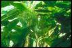 植物世界0057,植物世界,农业,