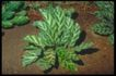 植物世界0058,植物世界,农业,