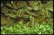 植物世界0059,植物世界,农业,