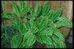 植物世界0061,植物世界,农业,
