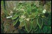 植物世界0064,植物世界,农业,