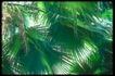 植物世界0065,植物世界,农业,