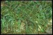 植物世界0066,植物世界,农业,
