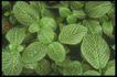 植物世界0067,植物世界,农业,