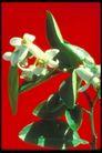植物世界0071,植物世界,农业,