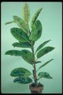 植物世界0072,植物世界,农业,