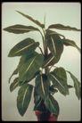 植物世界0073,植物世界,农业,