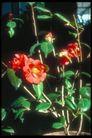 植物世界0079,植物世界,农业,