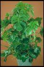 植物世界0082,植物世界,农业,