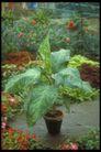 植物世界0087,植物世界,农业,