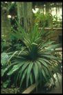 植物世界0088,植物世界,农业,