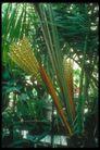 植物世界0090,植物世界,农业,