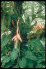 植物世界0091,植物世界,农业,农业 花朵 绿叶