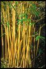 植物世界0092,植物世界,农业,竹叶 竹子