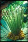 植物世界0093,植物世界,农业,绿叶 植物