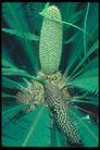 植物世界0094,植物世界,农业,种子 生物