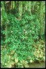 植物世界0095,植物世界,农业,