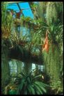 植物世界0096,植物世界,农业,草本 花草