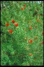 植物世界0098,植物世界,农业,红花 花园