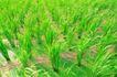 粮食蔬菜0004,粮食蔬菜,农业,
