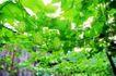 粮食蔬菜0010,粮食蔬菜,农业,