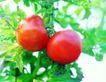 粮食蔬菜0021,粮食蔬菜,农业,