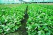 粮食蔬菜0022,粮食蔬菜,农业,