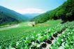 粮食蔬菜0025,粮食蔬菜,农业,