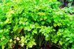 粮食蔬菜0026,粮食蔬菜,农业,