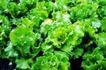 粮食蔬菜0029,粮食蔬菜,农业,