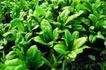 粮食蔬菜0031,粮食蔬菜,农业,