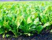 粮食蔬菜0033,粮食蔬菜,农业,