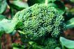粮食蔬菜0034,粮食蔬菜,农业,