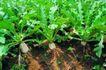 粮食蔬菜0036,粮食蔬菜,农业,