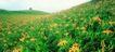 粮食蔬菜0040,粮食蔬菜,农业,粮食蔬菜 农业