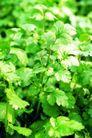 粮食蔬菜0042,粮食蔬菜,农业,