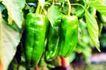 粮食蔬菜0049,粮食蔬菜,农业,