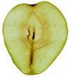 蔬果剖面0022,蔬果剖面,农业,