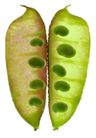 蔬果剖面0058,蔬果剖面,农业,豆荚