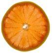 蔬果剖面0060,蔬果剖面,农业,橙子剖面