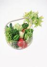 蔬菜天地0247,蔬菜天地,农业,青叶蔬菜