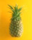 蔬菜天地0250,蔬菜天地,农业,菠萝