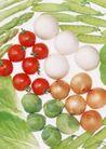 蔬菜天地0251,蔬菜天地,农业,