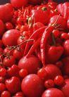 蔬菜天地0253,蔬菜天地,农业,