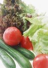 蔬菜天地0256,蔬菜天地,农业,