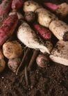 蔬菜天地0260,蔬菜天地,农业,