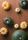 蔬菜天地0269,蔬菜天地,农业,
