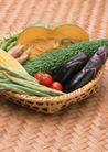 蔬菜天地0273,蔬菜天地,农业,