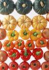 蔬菜天地0274,蔬菜天地,农业,